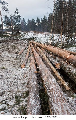 Wood logs are storing in forest during the winter.