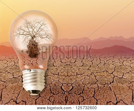 dead dry tree in a light bulb. on drought dry skin and sky orange color in summer. concept and idea relating to the use of energy.