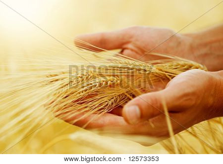 Concepto de Wheat.Harvest
