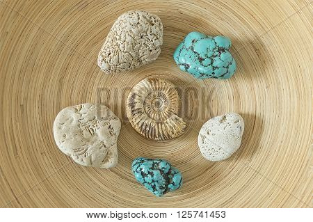 Ammonite and blue turquoise on wooden background