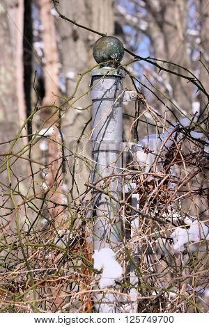 Galvanized chain link fence post covered in thorny vines. ** Note: Visible grain at 100%, best at smaller sizes