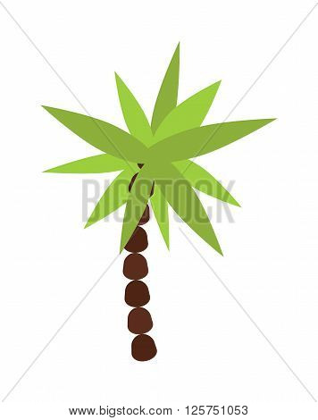 Palm, summer tree tropical beach illustration. Palm tree flat silhouette on island illustration. Summer palm tree tropical beach plant. Palm tree summer plant. Exotic flora palm on the beach