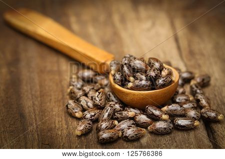 Close up of Castor beans in wooden spoon