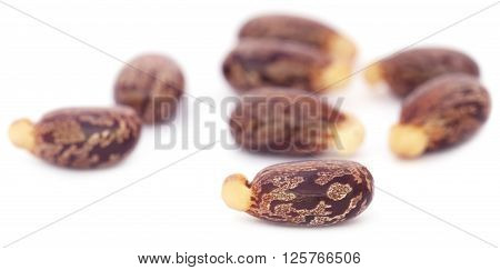 Closeup of castor beans over white background