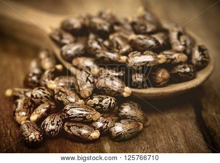 Close up of Castor beans in a wooden spoon