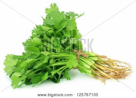 Close up of fresh coriander leaves over white background