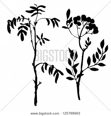 set of tree branches with leaves, rowan shoots, isolated hand drawn vector elements