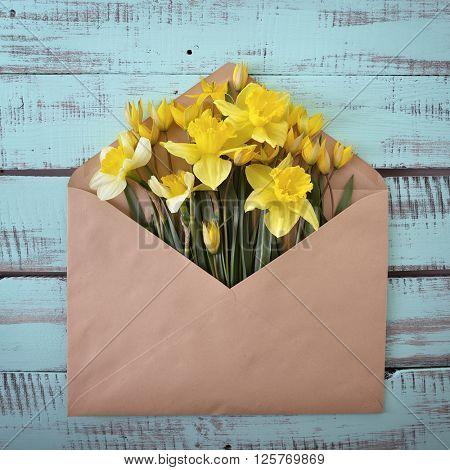 Narcissus. Envelope with spring flowers over rough obsolete wooden boards. Springtime design background.