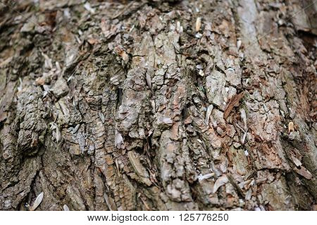 Tree bark background, selective focus