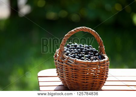ripe black currant berries in a basket soft focus