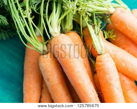 Bunch of fresh paddock carrots on green wooden background