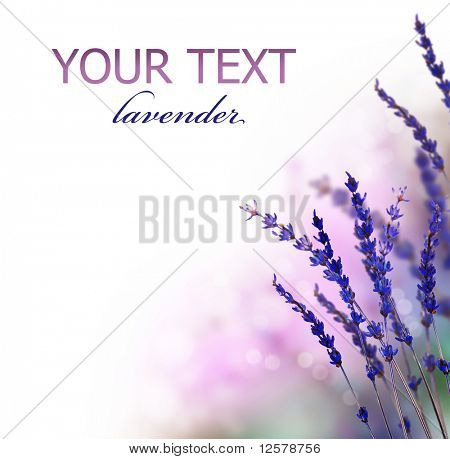 Lavender flowers border
