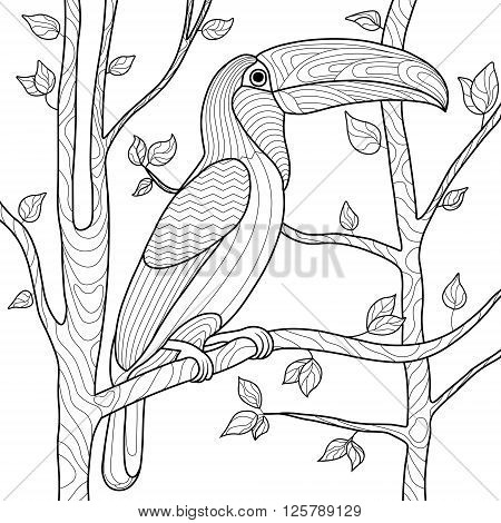 Toucan bird coloring book for adults vector illustration. Anti-stress coloring for adult. Toucan bird zentangle style. Black and white lines.