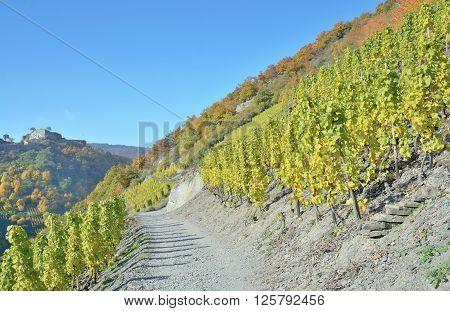 popular Red Wine Hiking trail through Vineyard Landscape in Ahr Valley near Bad Neuenahr,Rhineland-Palatinate,Germany