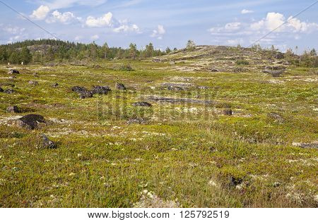 Landscape of vast Russian tundra in summer