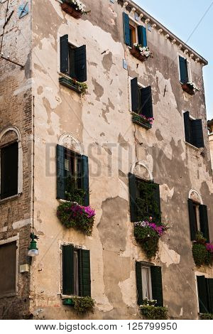 Old Facade In Venice With Green Vegetation And Flowers Under Some Windowpane