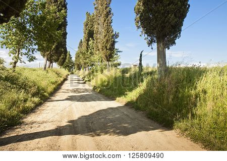 Typical country Tuscany road with cypresses (Italy)