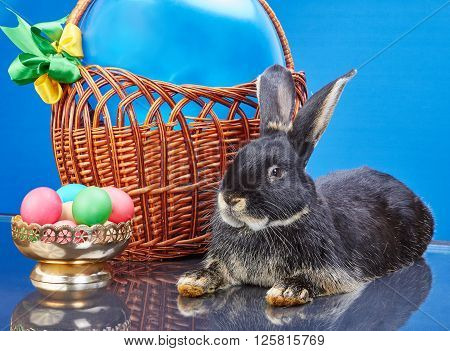 On a blue background rabbit lies near vase with Easter eggs and a basket with a balloon