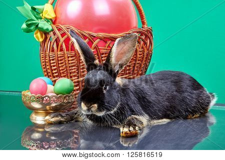 Vase with Easter eggs near a rabbit and a basket with a balloon
