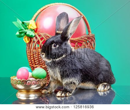 Vase with Easter eggs standing near the wicker basket and black rabbit