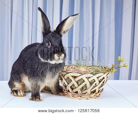 On a white background rabbit sitting near a beautiful basket with Easter eggs