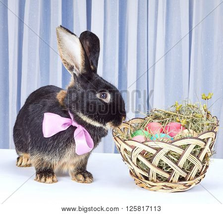 Rabbit with a nice bow on the neck stands near the Easter basket
