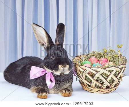 With a bow at the neck rabbit is lying near basket
