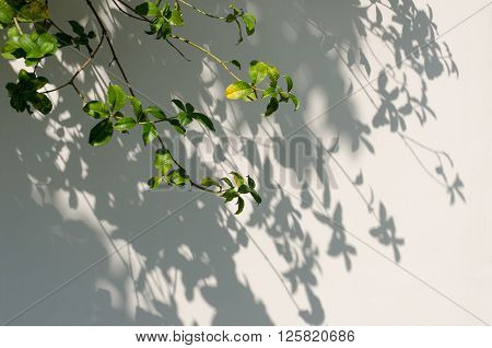 Shadows from the trees falling on the fence.