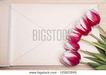 Photo Album And Tulips