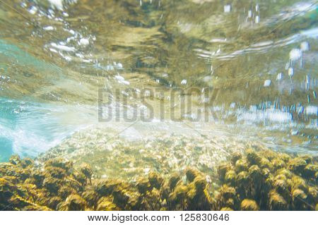 Coral Reef In Motion Blurred Underwater Scene