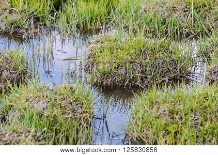 Grass On The Marsh