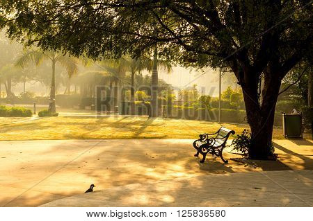 Sunlit bench in the early morning in the shade of a tree with slight fog around ** Note: Soft Focus at 100%, best at smaller sizes