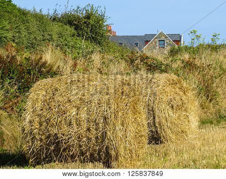 Straw hay bale on the field after harvest. Sark Island Channel Islands