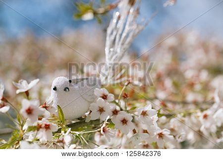 Little bird  in Spring with blossom cherry flower sakura