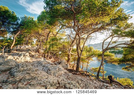 Beautiful nature of Calanques on the azure coast of France. Calanques - a deep bay surrounded by high cliffs.