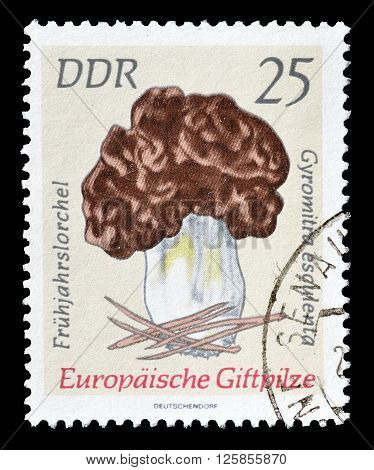 GERMAN DEMOCRATIC REPUBLIC - CIRCA 1978 : Cancelled postage stamp printed by German Democratic Republic, that shows Mushroom.