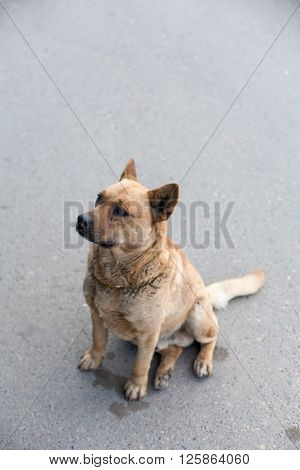 Homeless dog sitting on a road vertical image