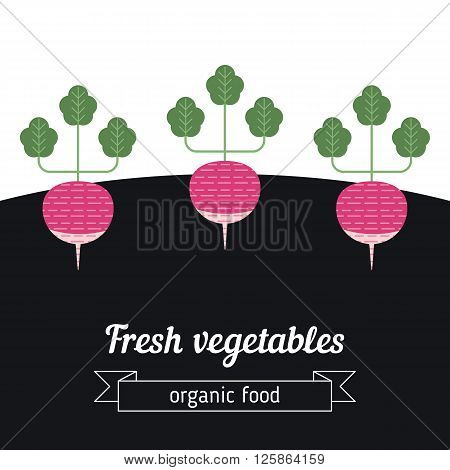 Radish vegetables illustration. Vegetables garden background with radish.
