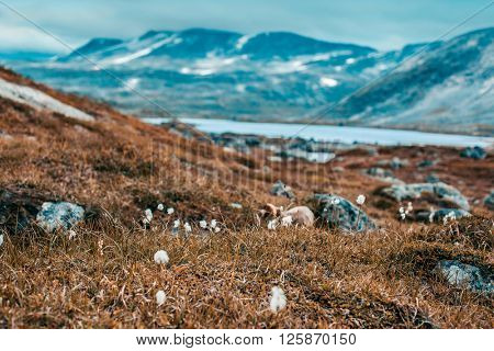 Norway severe landscape and small flowers. Focus on flowers on foreground. Autumn film style colors.