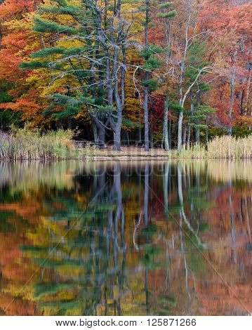 Colorful Trees Reflected in a Pond in Fall