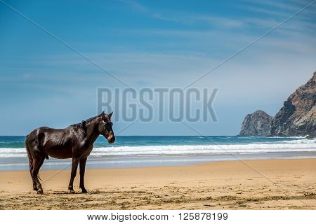 A lone stallion pauses on a remote beach in Baja Mexico.