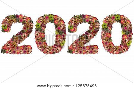 New year 2020 made from bromeliad flowers isolated on white background