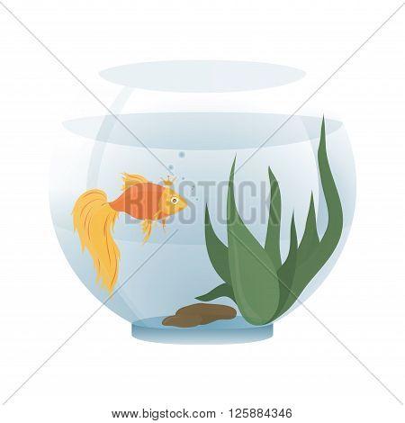 Cartoon goldfish in an aquarium on a white background - vector illustration