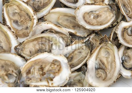 Man Holding Oysters In A Plate Shucked