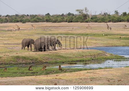 Botswana Plains Game