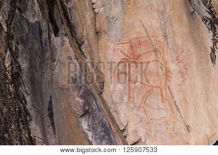 Bushman rock paintings of animals in Botswana