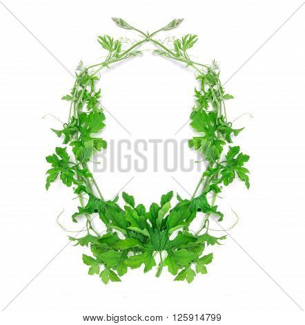 the green creeping plant leaf arrangement as frame border on white background