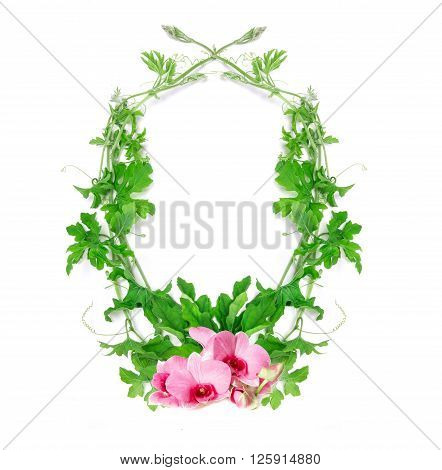 the green creeping plant leaf with pink flower arrangement as frame border on white background