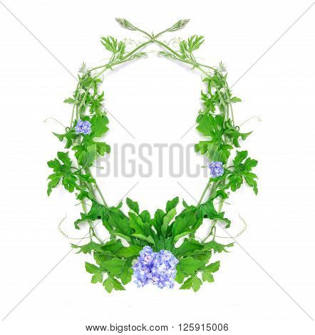 the green creeping plant leaf with blue flower arrangement as frame border on white background