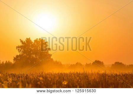 Orange sunset over harvest field in Rusia